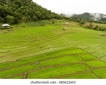 Aerial photo of paddy rice on mountain taken by drone