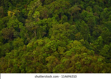 Aerial photo of a treetops