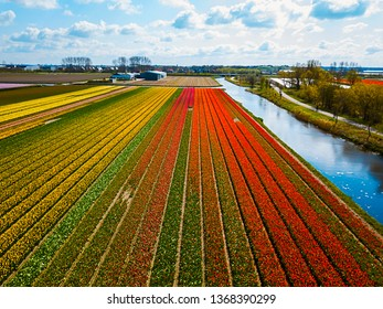 Aerial photo of the tulip flowers