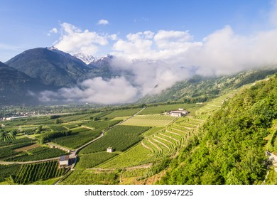 Aerial photo, Valtellina. Agriculture, vineyards and orchards