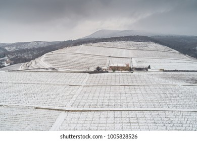 aerial photo of Vineyard in winter time with snow
