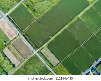 Aerial photograph of paddy field in Japan. A beautiful landscape.