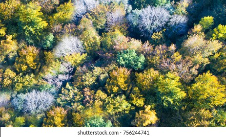 Aerial photography. autumn colorful forest seen from above