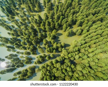 Aerial photography bird-eye view of sequoia In the water of the pond