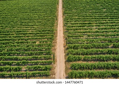 Aerial photography with drone. Grape plantation top view, Italy.