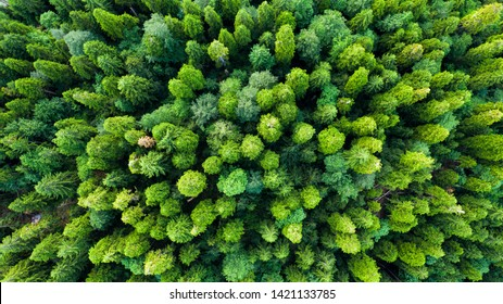Aerial photography. Green trees in the forest. View down. No people. Screensaver for your desktop. Wildlife. Nature.