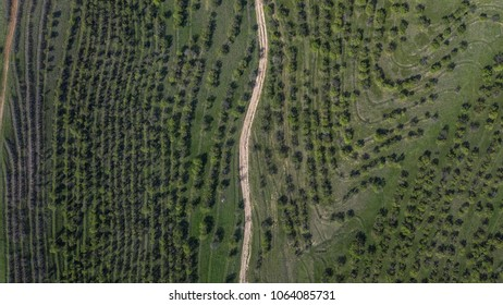 Aerial Photography south kazakgstan forest road