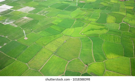 Aerial Photograpy. View drone beautiful green landscape of rice fields