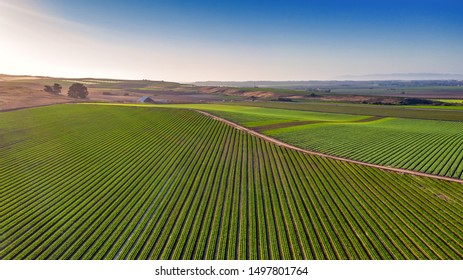 Aerial Photos above a vineyard in Southern California along the 101 highway.