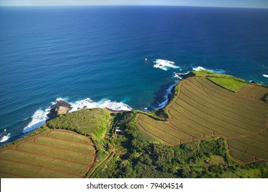 Aerial of Pineapple fields, Maui, Hawaii (northern coast)