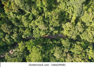 Aerial rainforest canopy in Malaysia  with river
