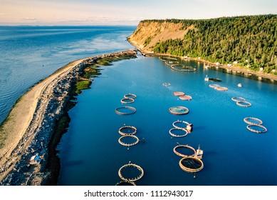 Aerial of salmon fish farms, Grand Manan Island, New Brunswick, Canada