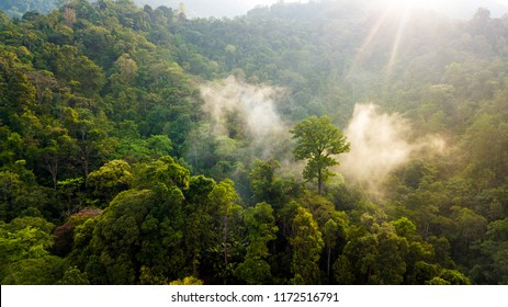 Aerial scenery of sunlight coming through the fog at dawn in the mystical Malaysian jungle near Tapah, Perak, Malaysia