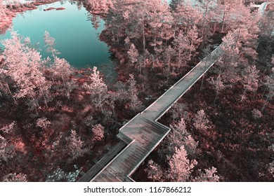 Aerial scenic view from drone with infrared effect it photot of wooden boardwalk decking between lake and swamp in nature reserve park. Bog marsh landscape drone point of view