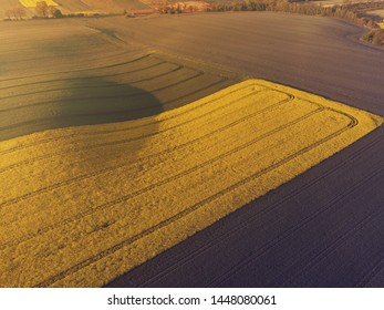 Aerial scenic view of yellow canola and green grain fields