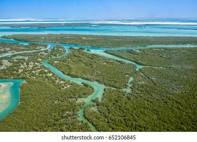 Aerial shoot for eastern mangrove in Abu Dhabi, united arab emirates