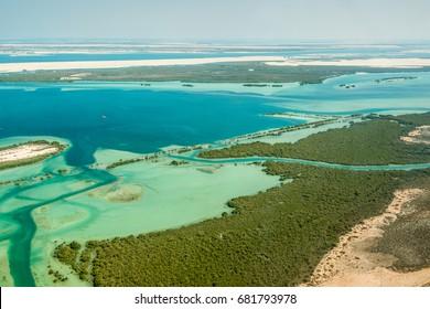 Aerial shoot for eastern mangrove tree in Abu Dhabi united arab emirates