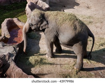 Aerial shot of Asian Elephant