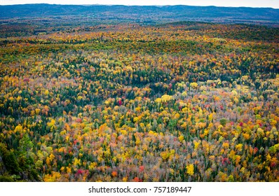 Aerial shot of autumn colours of northern Ontario forest.
