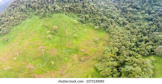 Aerial shot of a cattle pasture cut out of pristine montane rainforest. On the Amazonian slopes of the Andes in Morona Santiago province, Ecuador