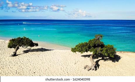 Aerial shot of Eagle beach with divi divi trees on Aruba island