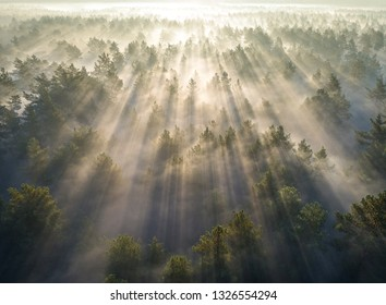 Aerial shot of foggy forest at sunrise. Flying over pine trees early in the morning.