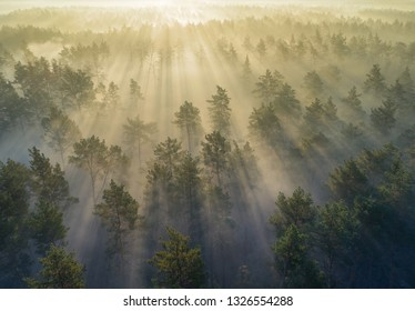 Aerial shot of misty forest during sunrise while sun rays coming through trees