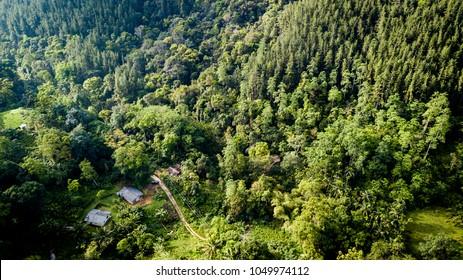 Aerial shot over Sinharaja Forest Reserve