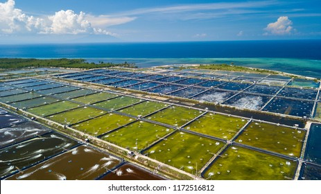 Aerial shot of salt extraction pools in Pejarakan, north west of Bali island, Indonesia