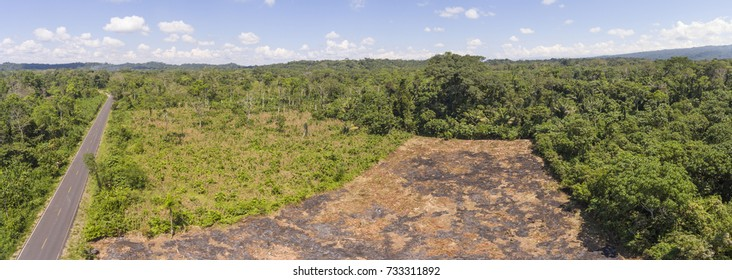 Aerial shot of slash and burn cultivation. This plot has been cleared from the rainforest, ready to plant crops (maize, manioc or banana). In Napo province in the Ecuadorian Amazon