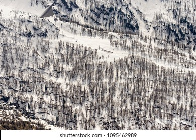 aerial shot, from a small plane, of fir wood on snowy slope, shot in high Brembo valley in bright springtime light, Orobie, Bergamo , Italy