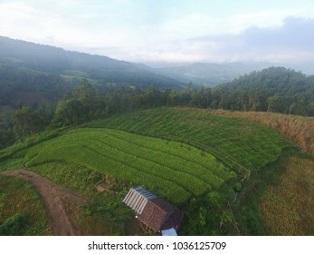 Aerial sky view from top rice plants and avocado plants, Chiang mai, Thailand