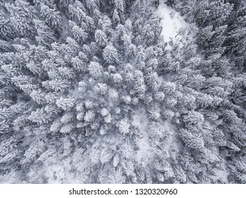 Aerial straight down view of snow covered trees in the Sierra Nevada Mountains of California.