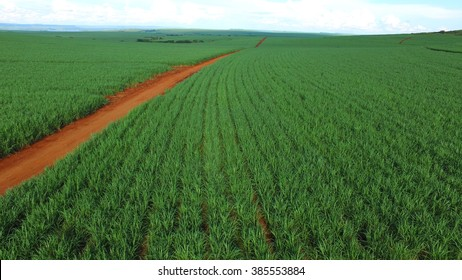 Aerial sugarcane field in Brazil.