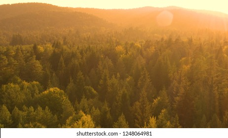 AERIAL SUN FLARE: Golden evening sunbeams shine on the vast green coniferous forest. Picturesque shot from above of the endless woods covering the rural landscape in Slovenia on a sunny summer morning