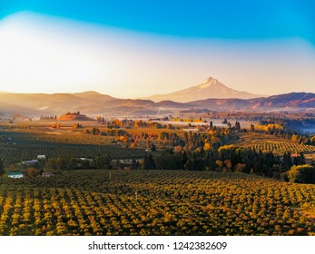 Aerial sunrise of Mt Hood, vineyards and fruit orchards, mist rising