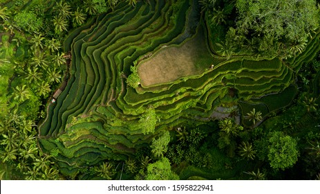 Aerial Tegallalang rice terraces, Ubud, Bali