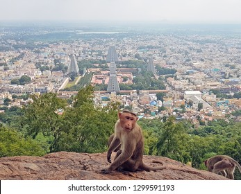 Aerial from the temple in Tiruvanamalai in India