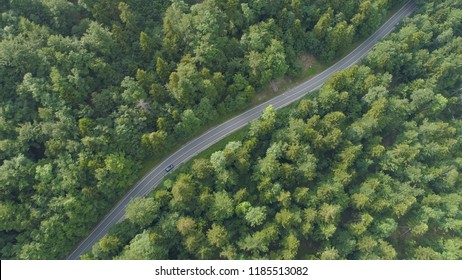 AERIAL, TOP DOWN: Dark colored car speeds through the idyllic dark green forest in Slovenia. Cinematic top down shot of a car on a joyride down empty asphalt road leading through the quiet woods.