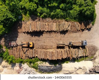 AERIAL, TOP DOWN: Flying above two yellow cargo trucks parked by large stacks of pine logs. Two logging lorries are left empty standing next to countless logs freshly chopped down in nearby forest.