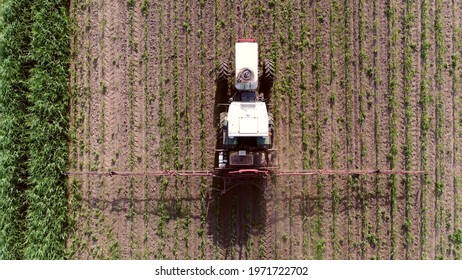 Aerial top down footage flying above tractor spraying chemicals over young corn field mostly glyphosate is used as pre-harvest herbicide and harvest aid on crops and is used to kill weeds