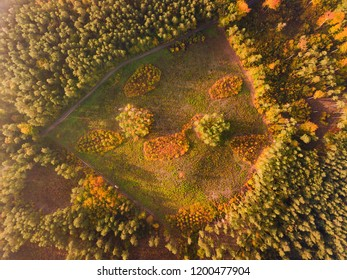 Aerial top down landscape with beautiful autumn forest from above. Bird's eye landscape.