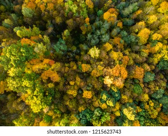 Aerial top down view of autumn forest with green and yellow trees. Mixed deciduous and coniferous forest. Beautiful fall scenery near Vilnius city, Lithuania