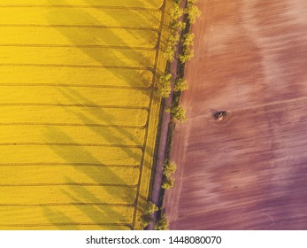 Aerial top down view of country road between yellow canola field and ploughed field at sunrise