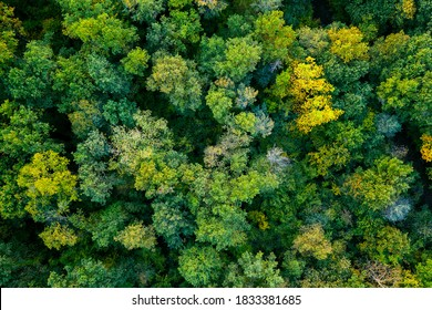 aerial top down view of a green forest, drone view, natural green background