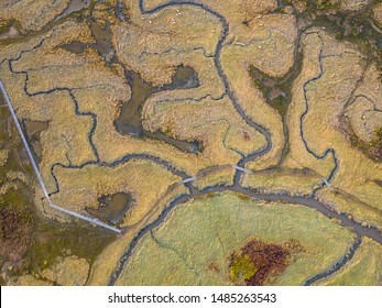 Aerial top down view of tidal marshland with natural meandering drainage system in Verdronken land van Saeftinghe in Zeeland, Netherlands