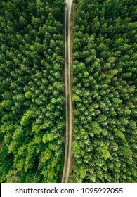 Aerial top view of a country road through a fir forest in summer in rural Finland