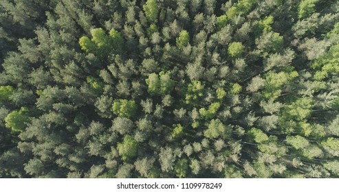 Aerial top view flight over mixed forest on a sunny summer day