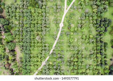 aerial top view of the footpath through apple trees orchard