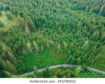 Aerial top view forest coniferous tree. Rainforest ecosystem. deforestation of a spruce forest. Ecology concept change tree forest drough.